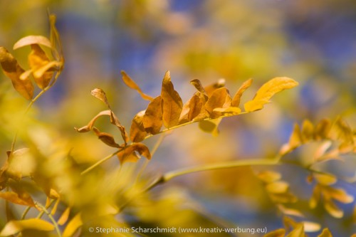 image-15900: autumn leaves